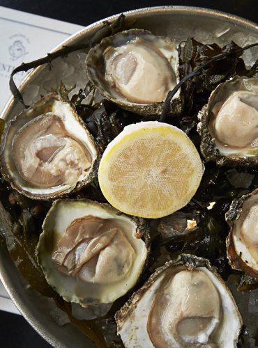 oyster_guinness-edited1