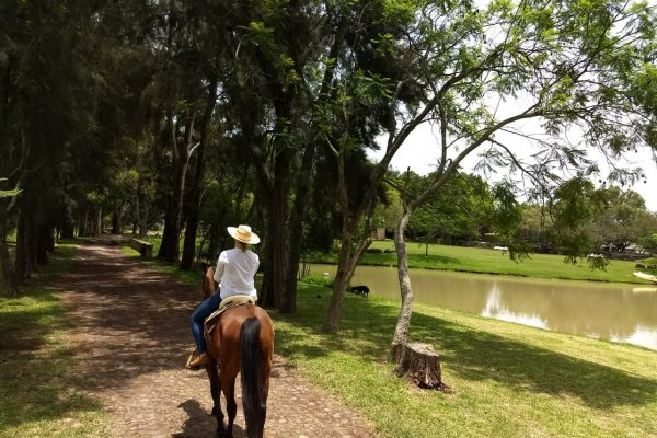 Horse Riding Labor