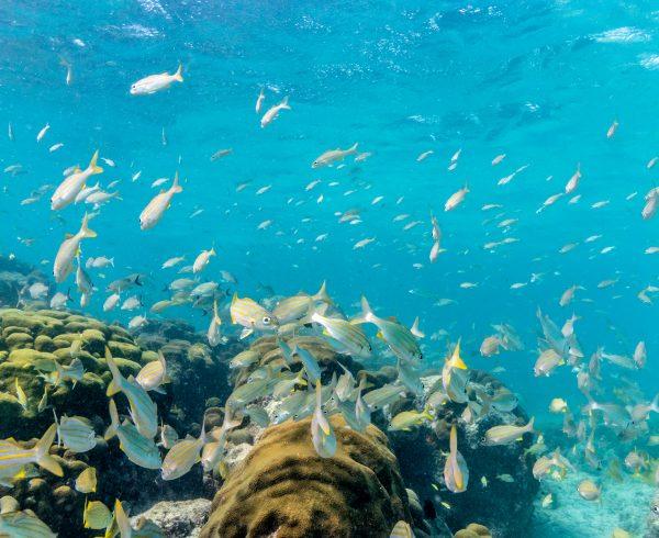 Aruba Underwater BBB