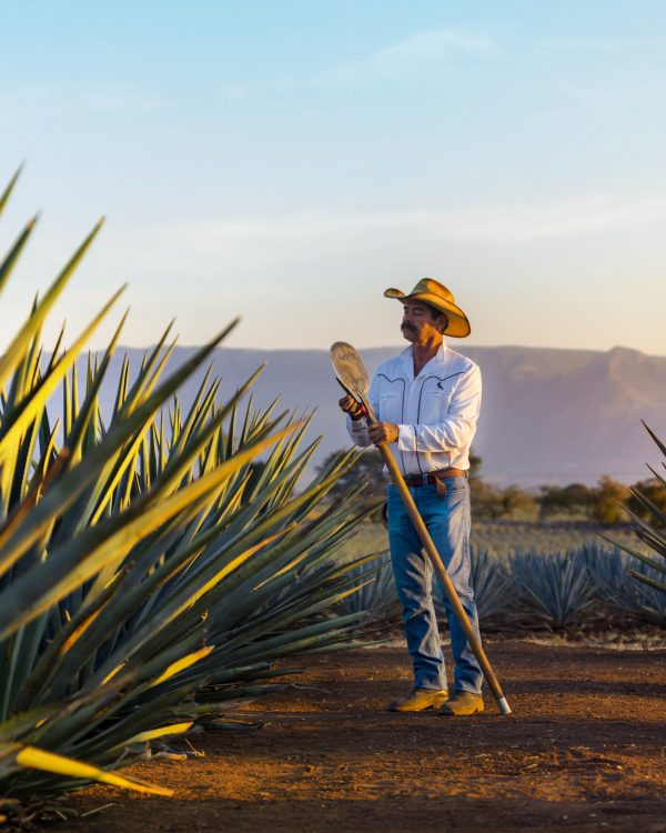 Tequila Fields