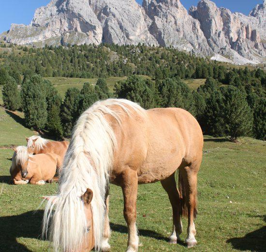 Val Gardena Horses
