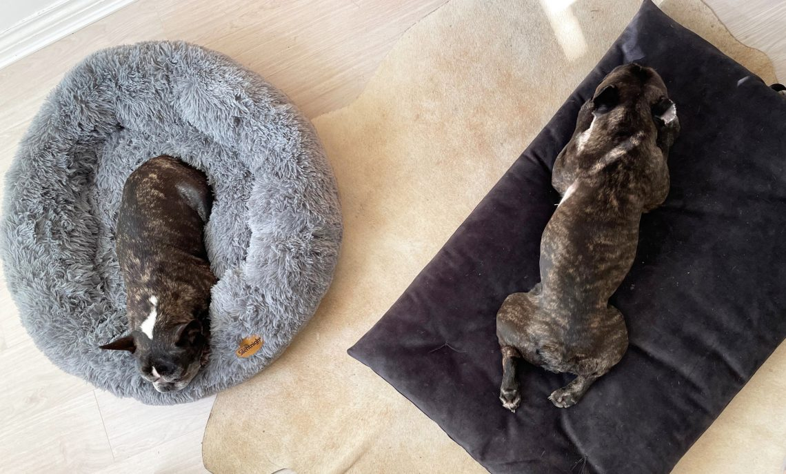 Let sleeping dogs lie: Dog beds and toys